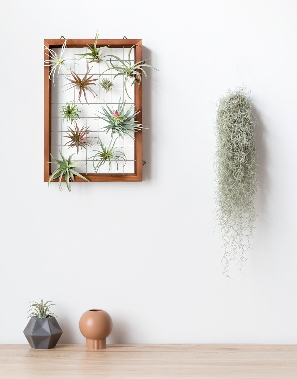 Wood frame with wire grid holding different air plants