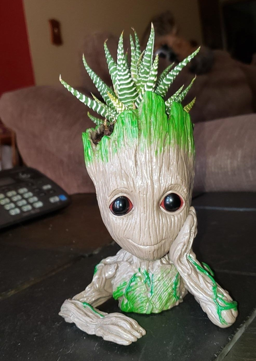 reviewer's Groot flower pot with a succulent in it
