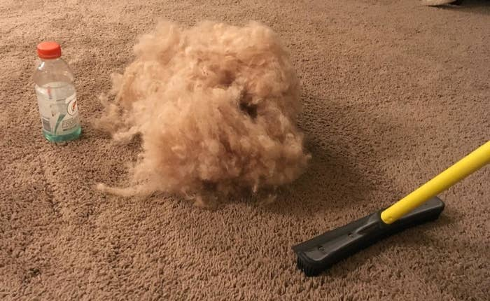 The broom sweeping up a huge pile of dog fur from the carpet