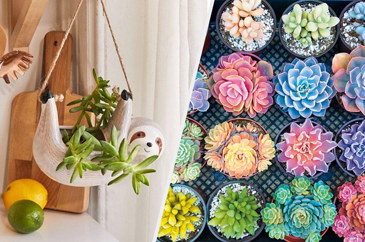 gardener gift for women valentines day gift for women floral wall art birthday gift for mom. plant lover gift for house citrus wall art