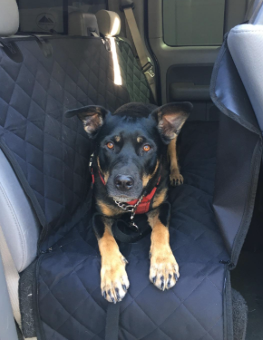 a reviewer's photo of their dog in the hammock in the back of a car