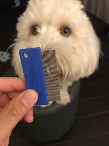 Reviewer holding the comb showing the eye boogers it removed