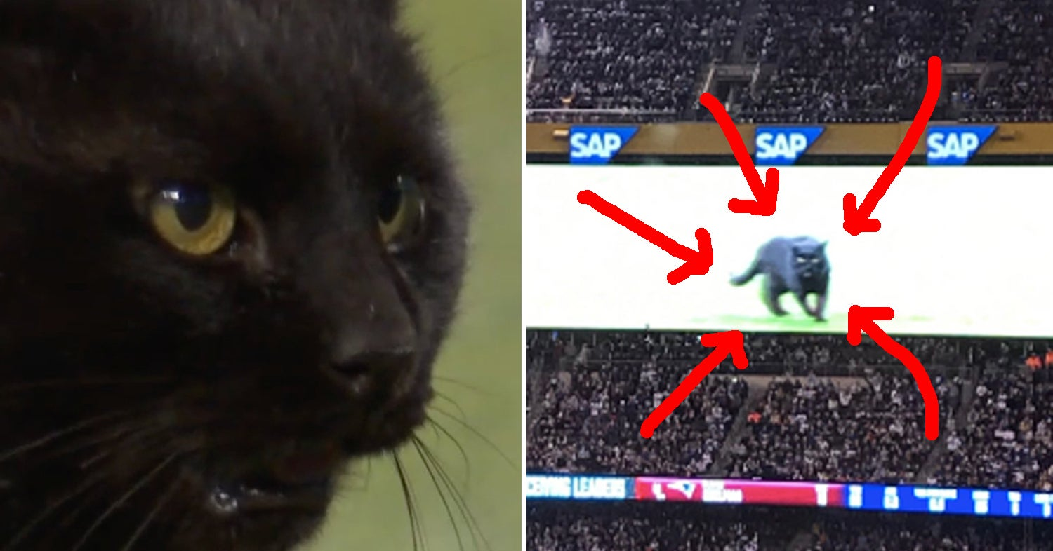 The Black Cat On The Field During The Giants Cowboys Monday