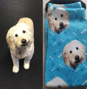a reviewer's photo of a dog side by side with the socks with their face on it