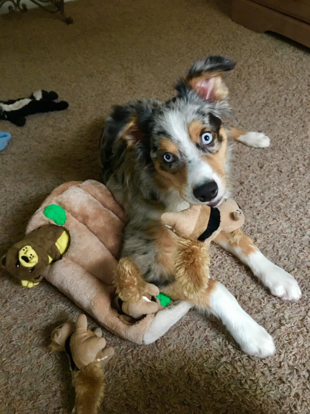 Reviewer photo of their dog playing with the toy