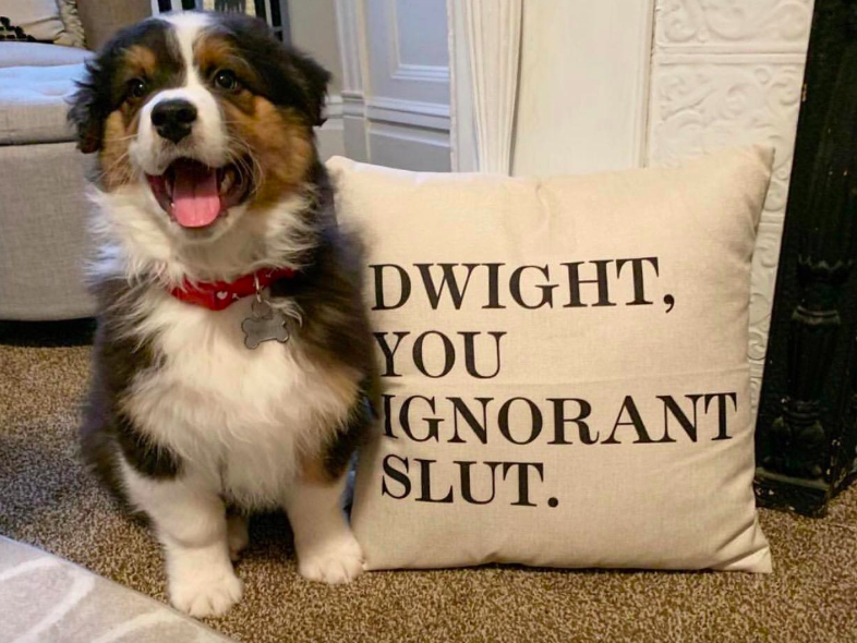"""A customer review photo of their dog next to the linen pillow cover that reads, """"Dwight, you ignorant slut"""""""