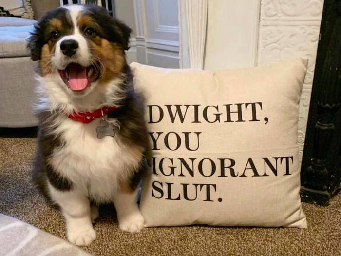 "A customer review photo of their dog with the pillow case that says ""dwight you ignorant slut"""