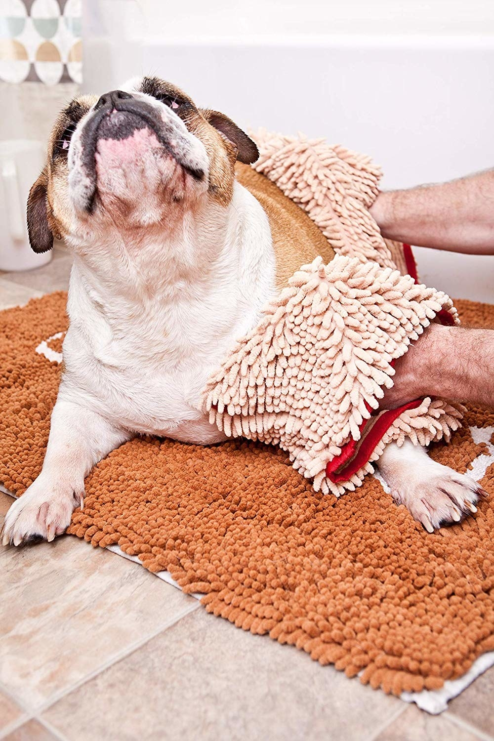 Hands drying a bulldog with the towel