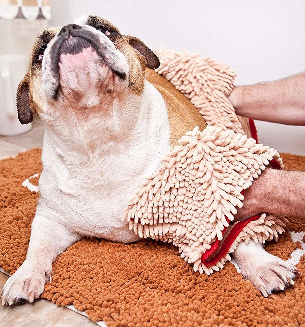 Model drying off dog with microfiber towel