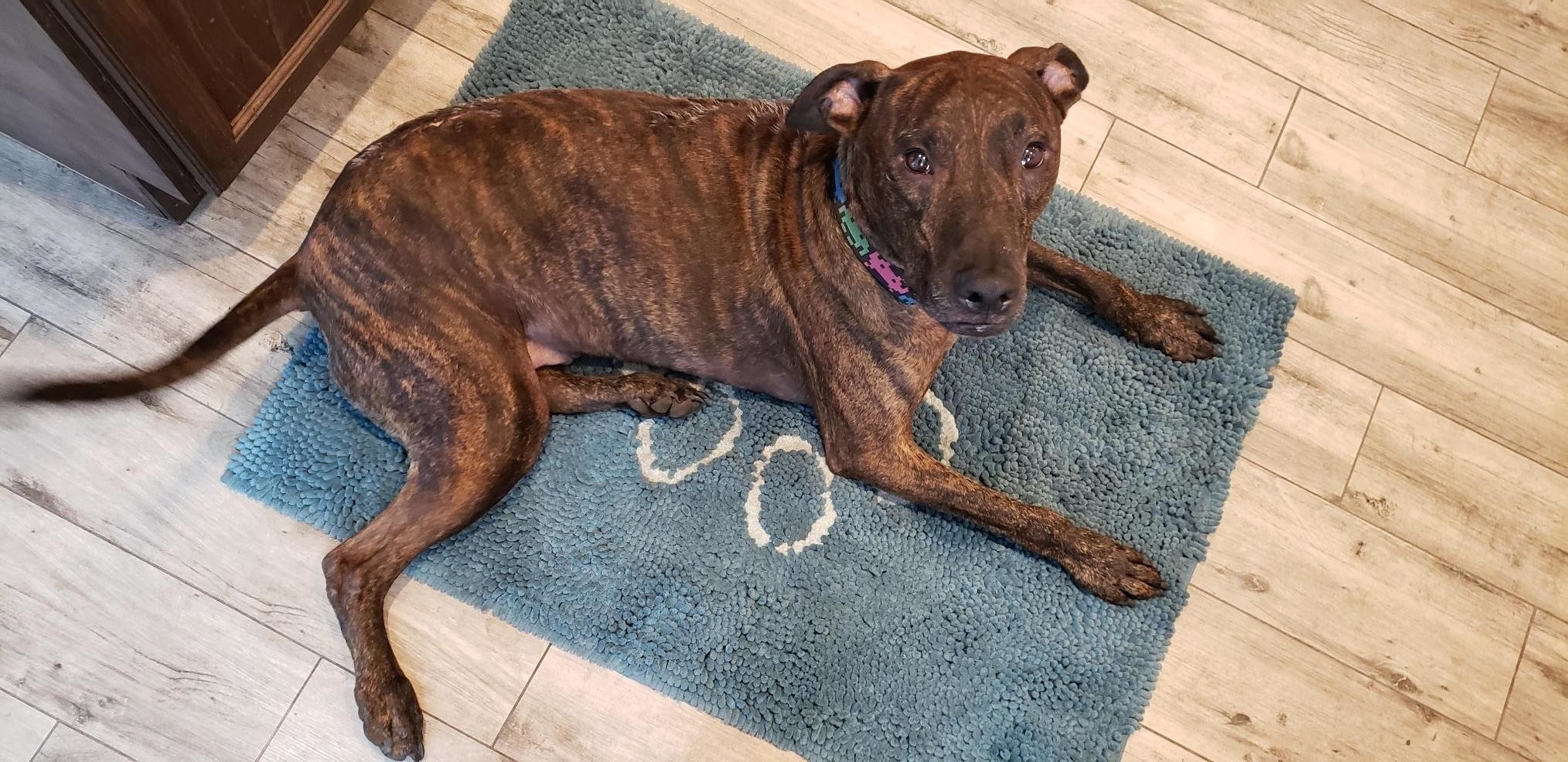 Reviewer photo of dog laying on doormat