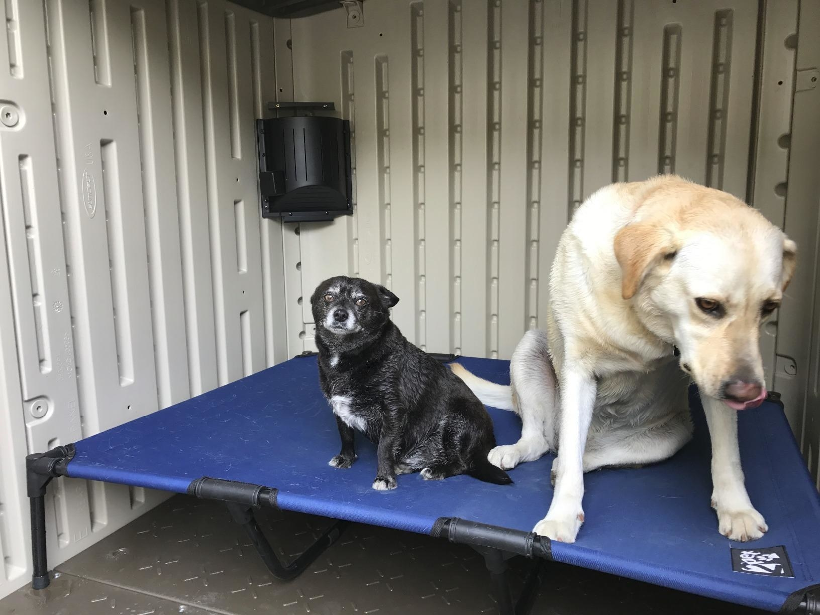 Reviewer photo of two dogs next to dog house heater
