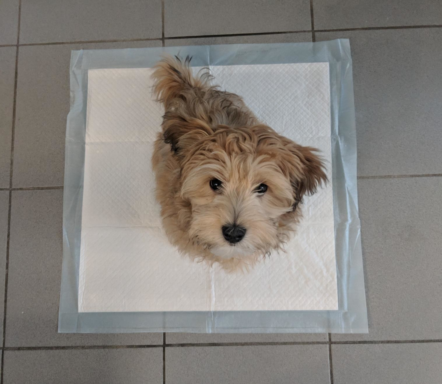 Reviewer photo of their small dog sitting on the large square pad