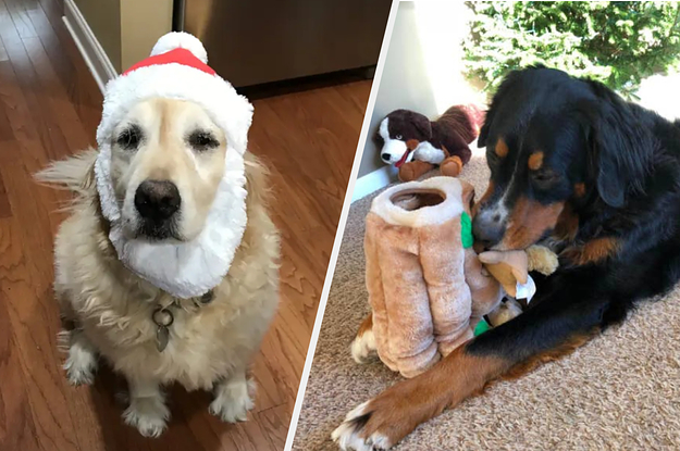 49 Gifts You'll Want To Give Your Dog This Year