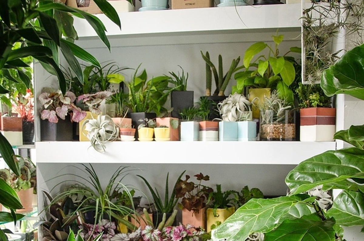 Best Places To Houseplants Online
