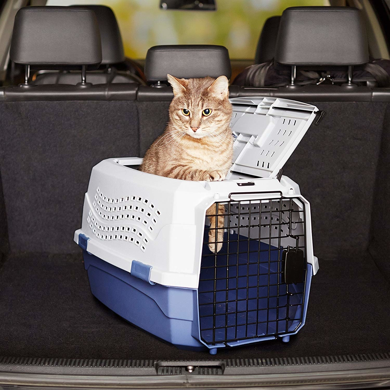 A cat standing inside the kennel kept in a car, with its upper body outside.