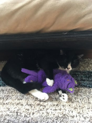 Reviewer photo of their cat snuggling with the toy