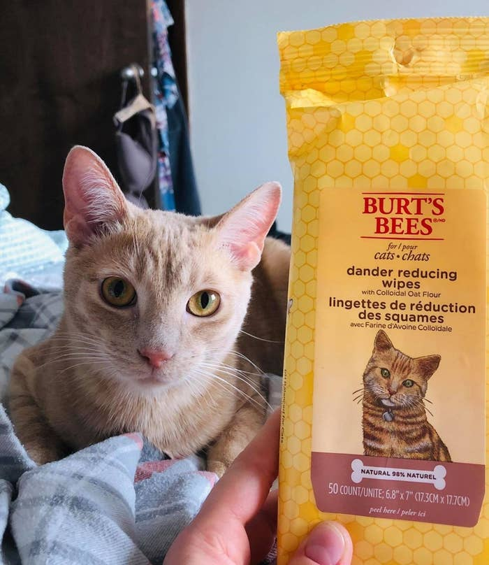 reviewer photo showing their cat next to a pack of the wipes