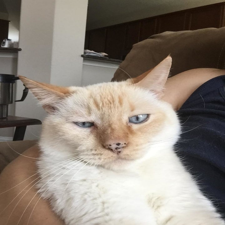 Reviewer photo of the same cat with no eye infection after using the wash