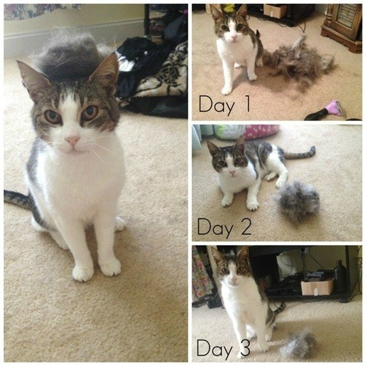 Photos from three different brushing days showing a reviewer's cat sitting next to a large pile of fur