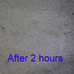 same reviewer's pic of a fading stain on carpet