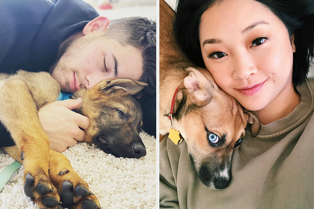 17 Celebrity Pet Instagram Accounts To Follow ...