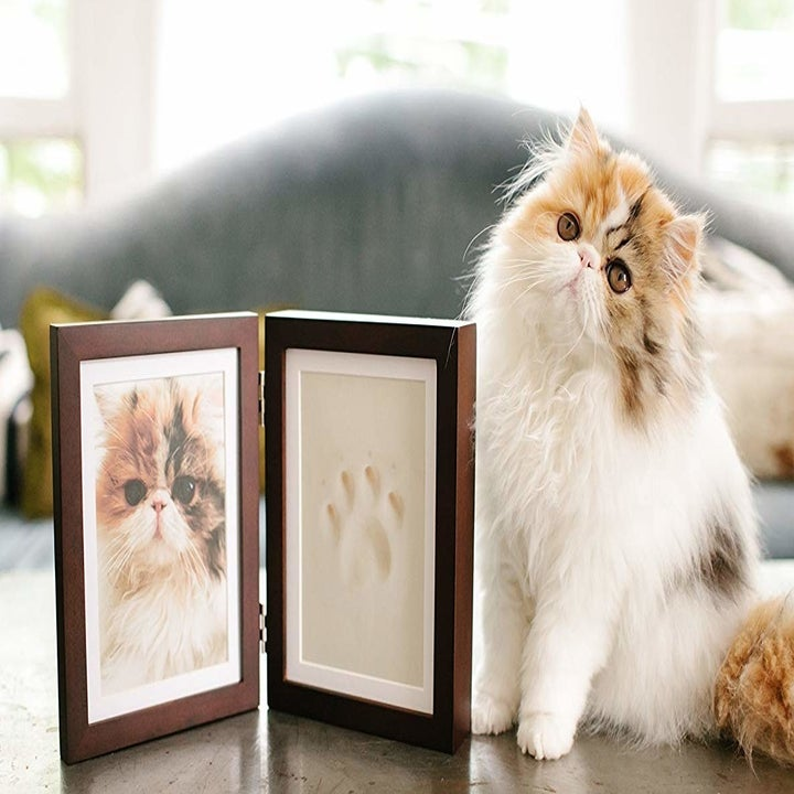 Cat sitting beside hinged frame with photo of the cat and their paw print