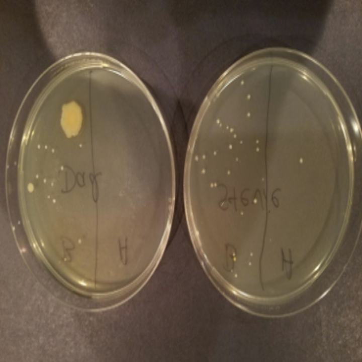 two petri dishes with swabs showing the germs before and after using the product