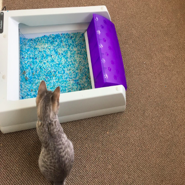 a reviewer's cat staring into the litter box
