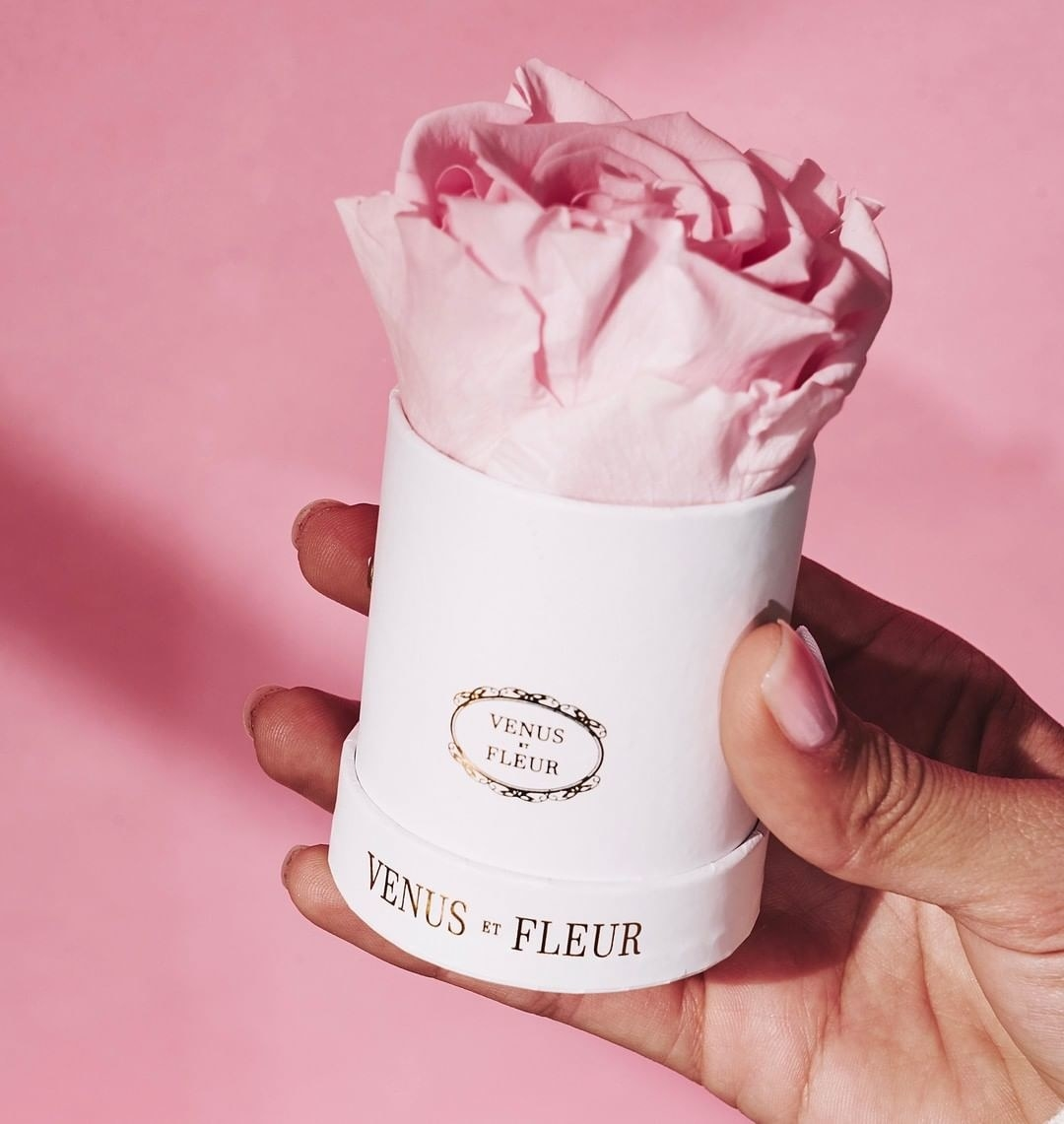 hand holding the pink rose in a white container