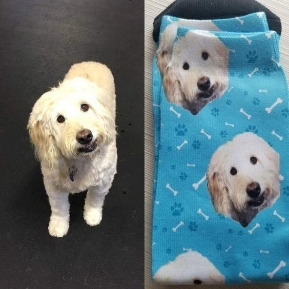 a white dog on the left and on the right a pair of blue socks with pictures of the white dog on them