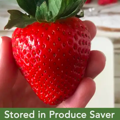 strawberry looking fresh after storing in produce saver