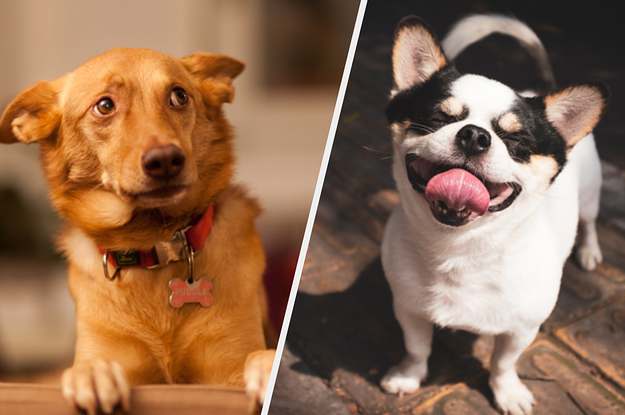 The Most Popular Dog Names Of 2019 Are Both Surprising And Downright Adorable