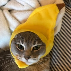 Cat wearing a banana hat