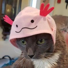 Cat wearing an axolotl hat