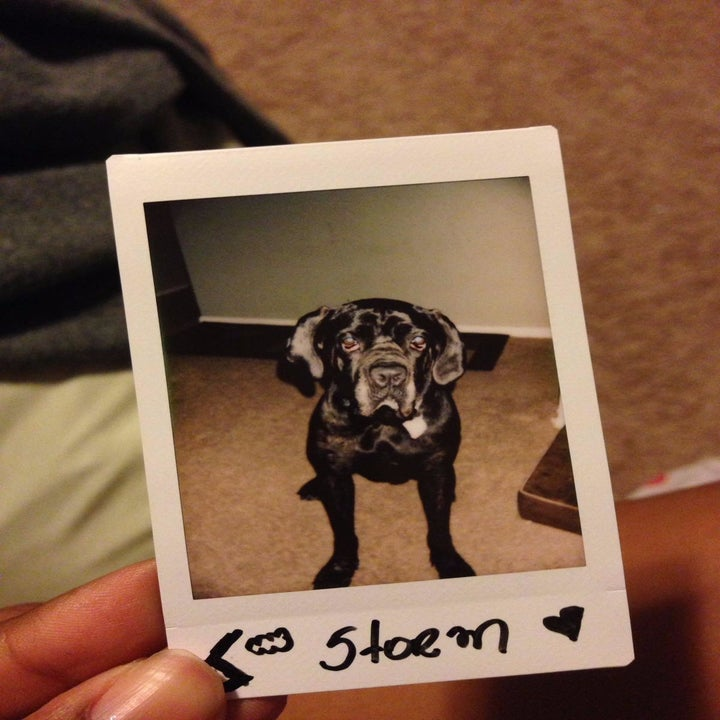 reviewer's instax photo of their dog