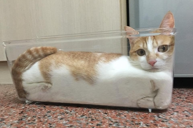 17 Beweisfotos dafür, dass Katzen ihren eigenen wissenschaftlichen Regeln folgen