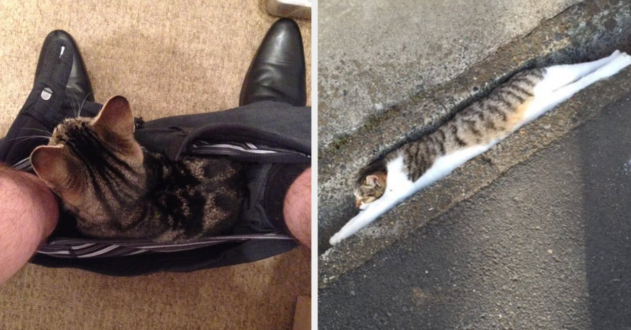 17 Cats Who Decided Where They Wanted To Be And That Was That