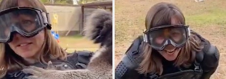 A TV Reporter Got Pranked With A Koala And It's One Of The Funniest Things You'll See Today
