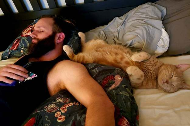 18 Boyfriends And Husbands Who Were Wrong About Not Wanting A Cat