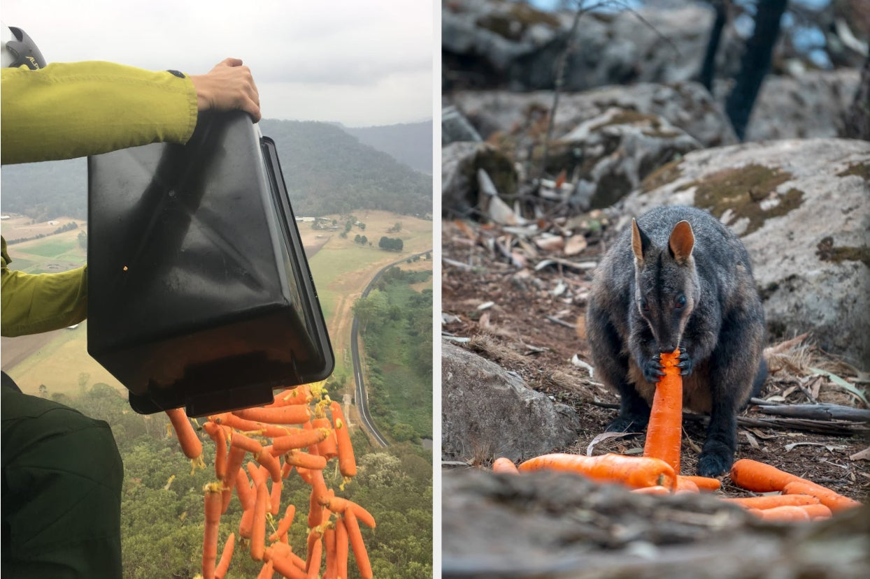 Australia Is Dropping Veggies From Helicopters ...