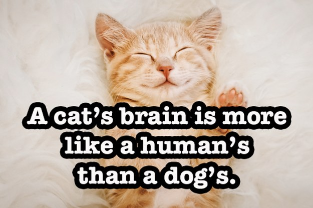 15 Cat Facts That Sound Fake, But Are 100% True