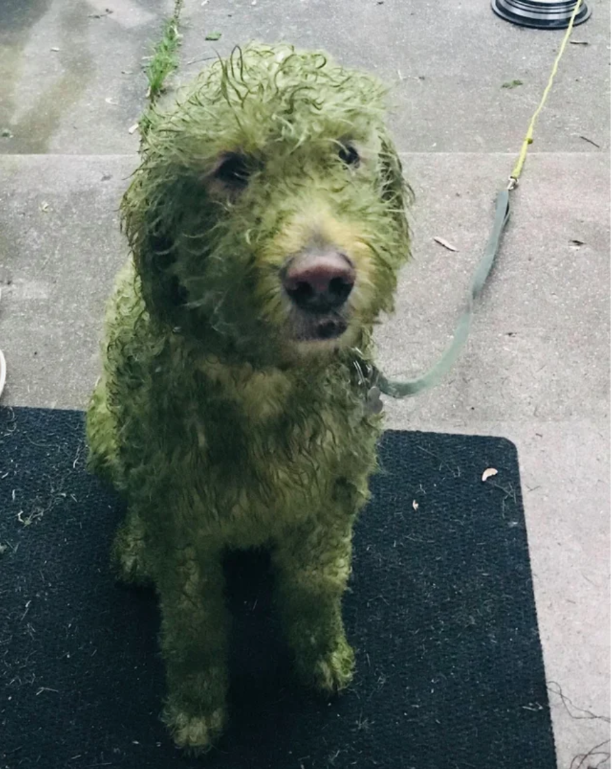 A dog covered in lawn shavings