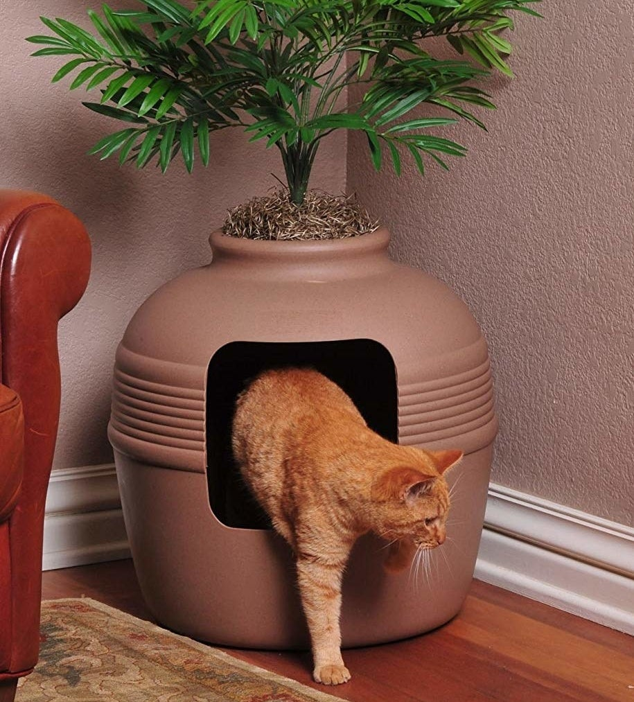 A cat emerges from the vase-like litterbox