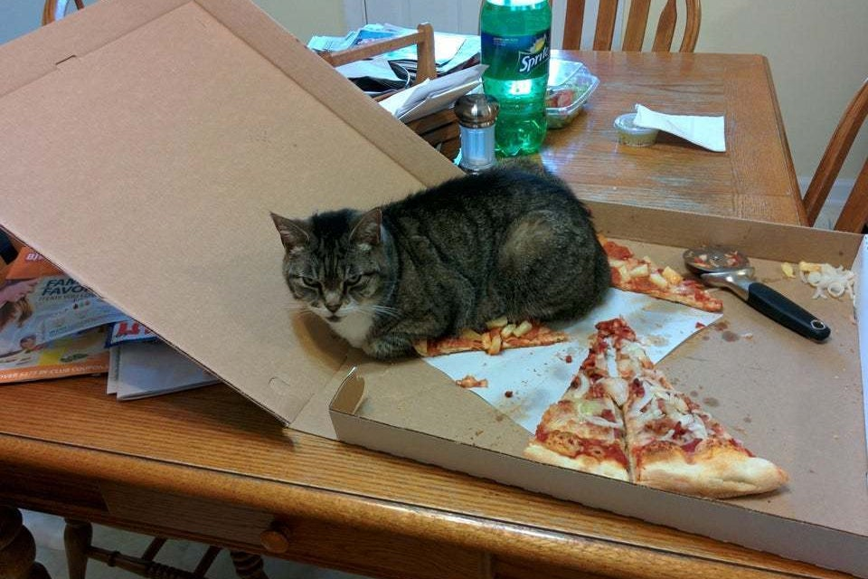 15 Cats Who Prove That Joy Comes In The Form Of A Pizza Box