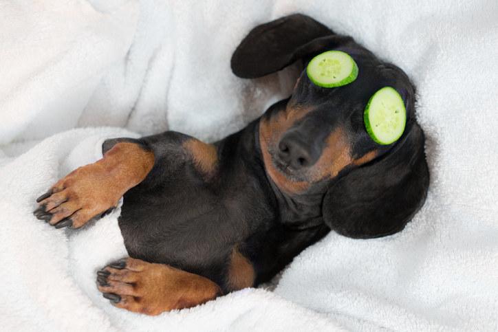 Labrador Retriever Puppies Dogs Bath Bubbles Bucket Satin Chrome Plated Metal Money Clip