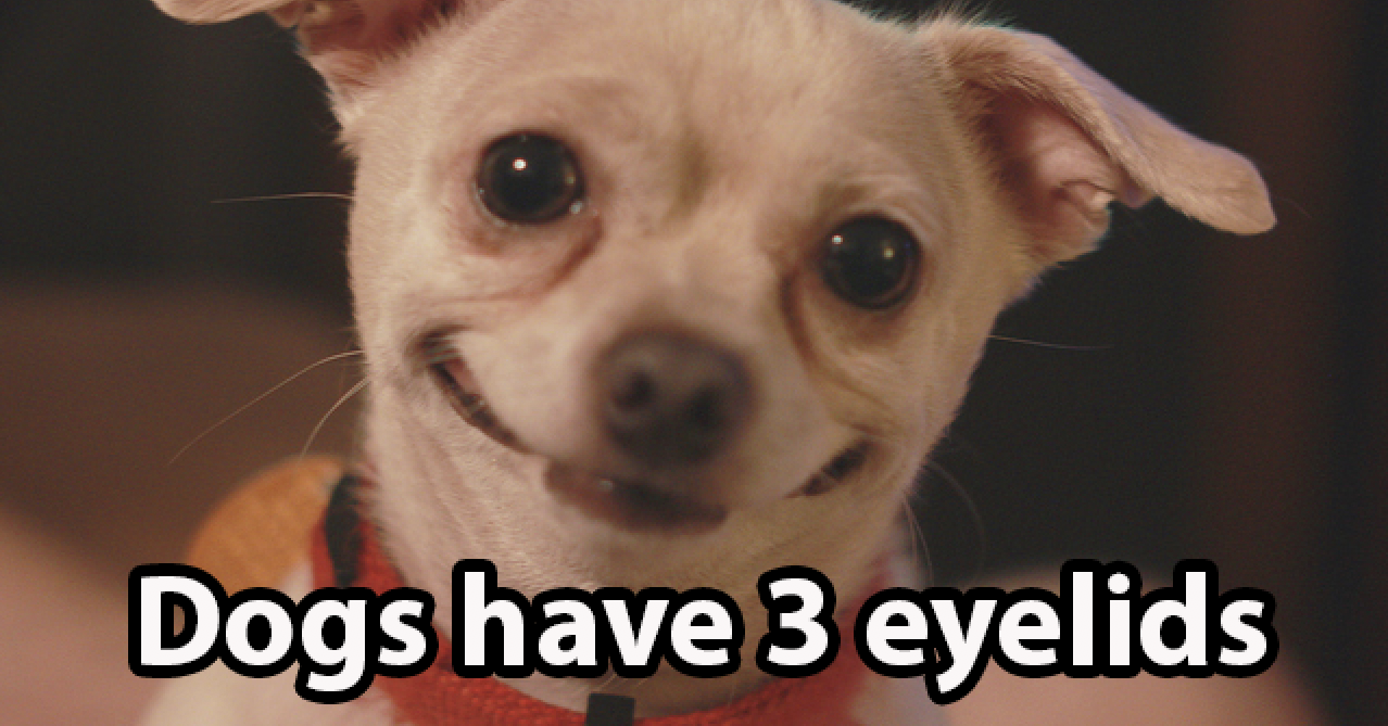 16 Really Fascinating Facts About Dogs
