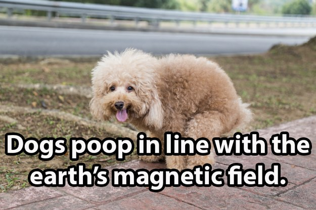 16 Lesser Known, But Very Interesting Facts About Dogs