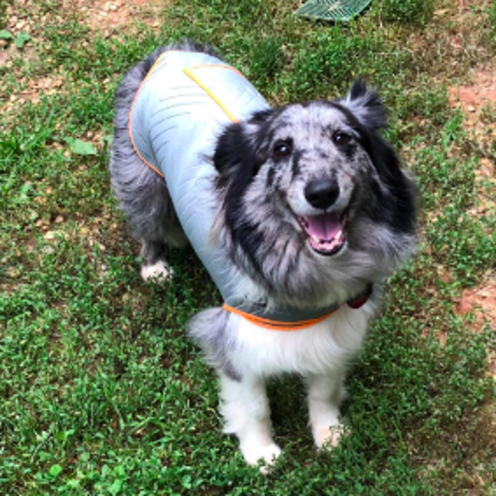 Different dog in yard with sweater on