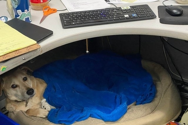 15 Dogs Who Deserve To Be Employee Of The Month