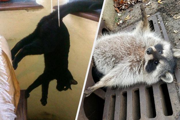 15 Tiere, die sich in ziemlich bizarren Lebenslagen wiedergefunden haben